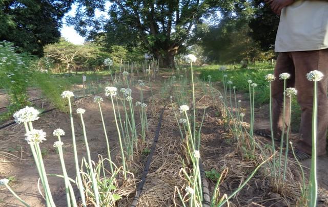 South Sudan Bio-dynamic farm